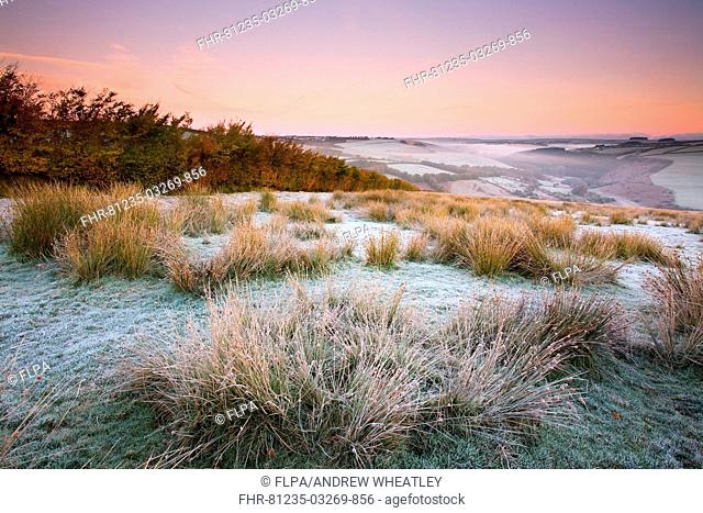 View of frost covered moorland habitat at sunrise, with mist rising from valley, looking towards River Barl, Landacre Gate, Exmoor N P , Somerset, England