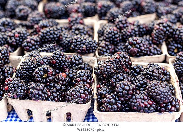 Boxes of organic blackberries for sale at local farmers market