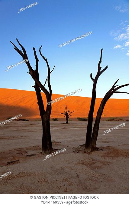 Camelthorn dead tree Acacia erioloba, Dead Vlei, Namib-Naukluft National Park, Namib desert, Namibia