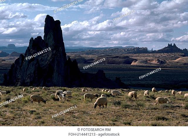 park, monument, national, arizona, valley, sheep
