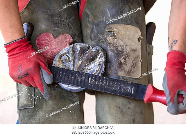 Domestic horse, foot care: The bearing surface of the foot is levelled with a rasp. German