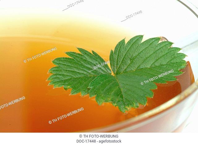 tea made of leaves of wild strawberry - Strawberryleaftea - medicinal tea - herbtea - Fragaria vesca - Fragole comune - te