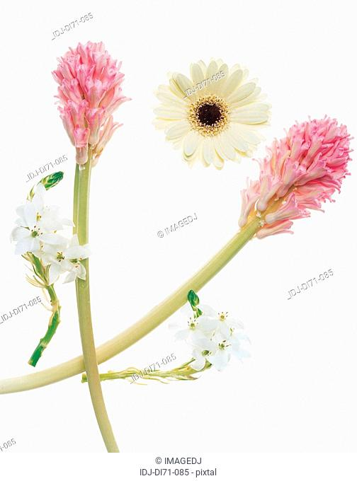 Flowers form a frame