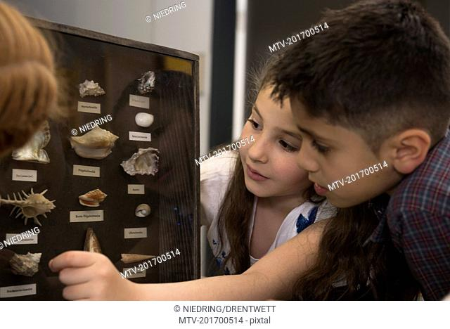 Students studying about seashells from display cabinet, Fürstenfeldbruck, Bavaria, Germany