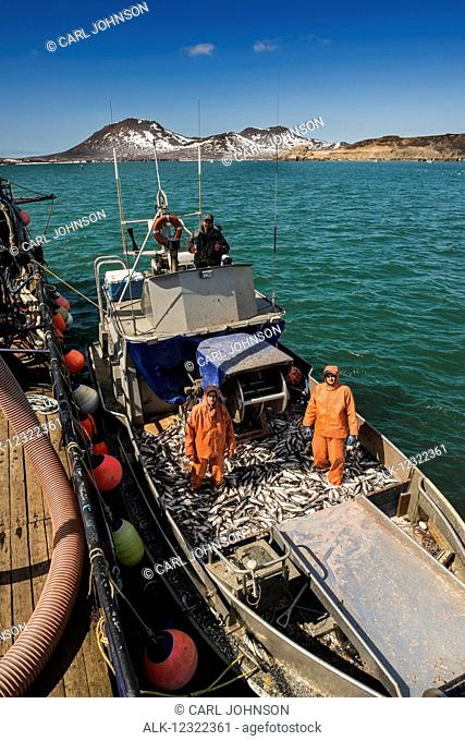 A commercial fishing crew ties up to a tender to deliver its catch during the Togiak Herring fishery in Kulukak Bay, Bristol Bay region of Alaska