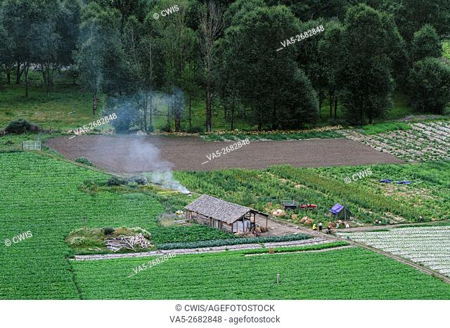 Xinduqiao, Sichuan province, China - the beautiful farmland view with green plants in the datyime