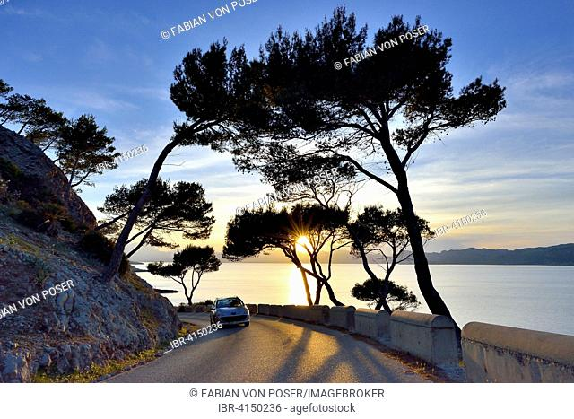Pine trees in the sunset on a country road, near Alcudia, Majorca, Balearic Islands, Spain