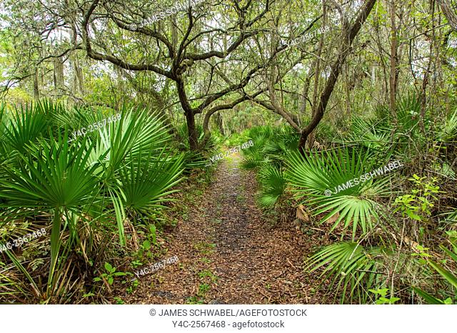 Walking trail though tropical woods in Oscar Scherer State Park in Nokomis Florida