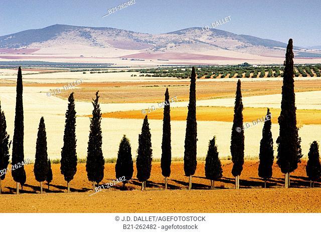 La Mancha region, Ciudad Real province. Spain