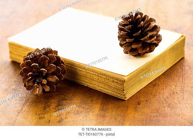 Antique book and pine cones