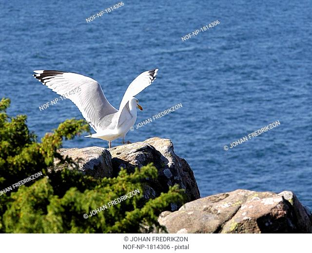 Seagull perching on rock formations