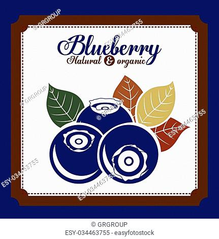 delicious blueberry design, vector illustration eps10 graphic