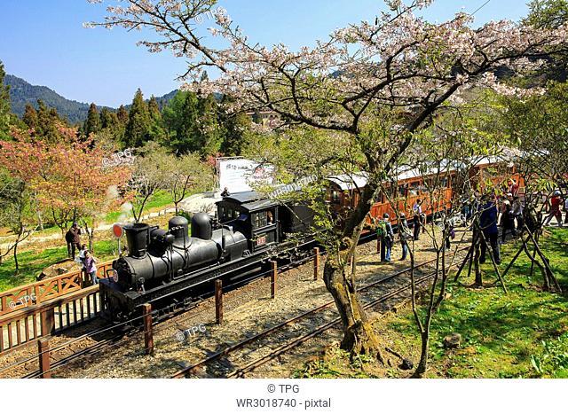 Ali,steam train