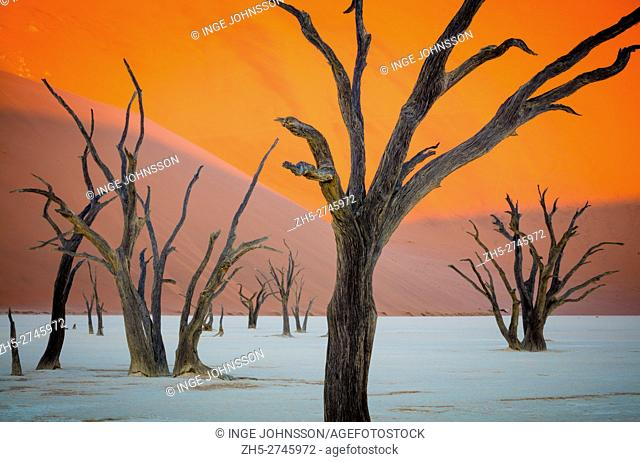 Deadvlei is a white clay pan located near the more famous salt pan of Sossusvlei, inside the Namib-Naukluft Park in Namibia