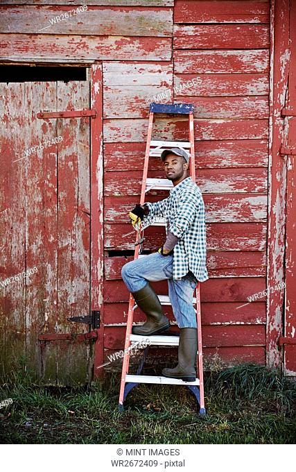 A young man in working clothes and cap standing on a ladder leant up against a barn