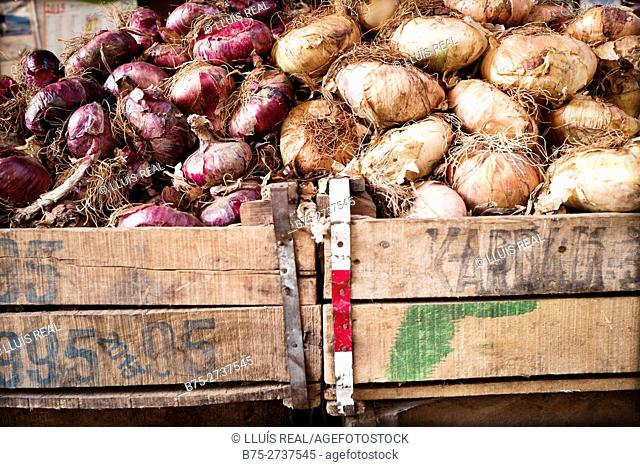 Close-up of two wooden crates with different varieties of onions (red and cippolini onions). Fez, Morocco
