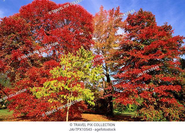 England, Sussex, Autumn Leaves in Sheffield Park Garden