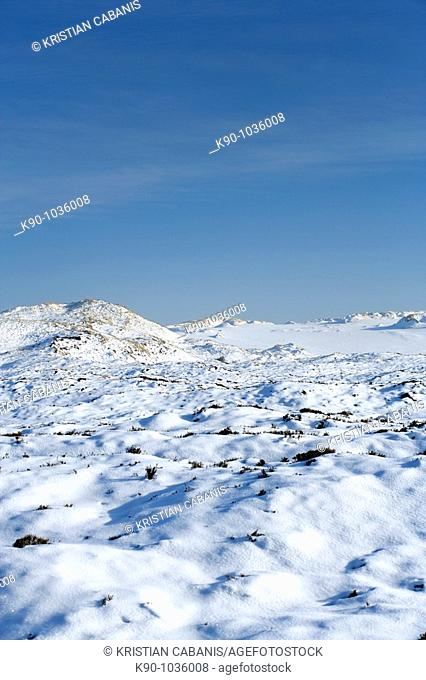 Snow covered landscape with sanddunes with bright blue sky at a sunny day, Sylt Island, Schleswig-Holstein, Germany, Europe