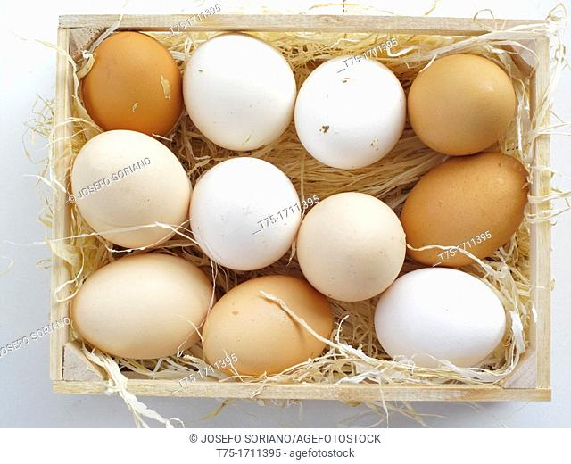 Duck and goose eggs