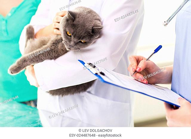 medicine, pet, animals, health care and people concept - close up of veterinarian doctor with british cat and assistant with clipboard taking notes at vet...