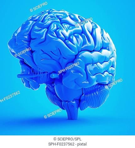 Illustration of a blue brain