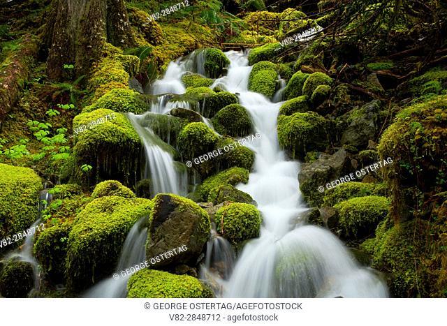 Creek along Kopetski Trail, Opal Creek Scenic Recreation Area, Willamette National Forest, Oregon