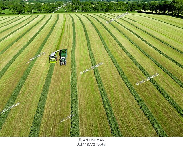 Aerial view of forage harvester cutting grass silage crop in field and filling tractor trailer