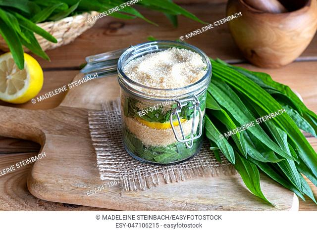 A jar filled with ribwort plantain leaves, lemon and cane sugar, to prepare herbal syrup against cough