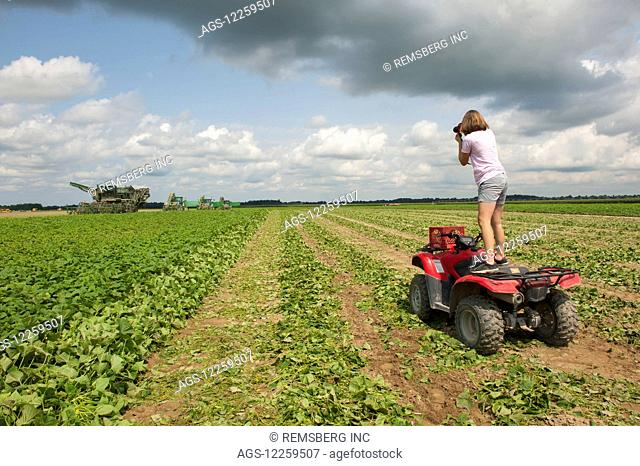 Female farmer photographing the cucumber harvest on her farm while standing on her ATV Four Wheeler; Preston, Maryland, United States of America