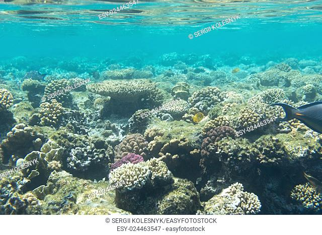 Coral reefs on the bottom of red sea, Egypt