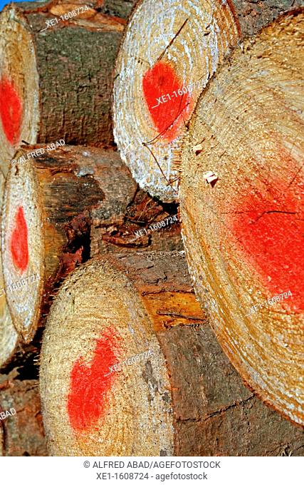 stacked logs, forestry, Vallgorguina, Catalonia, Spain