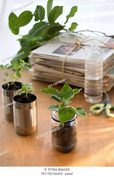 Stack of old newspapers and seedlings in jar and cans