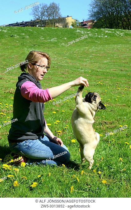 Young woman play with a pug dog on a green in Ystad, Scania, Sweden
