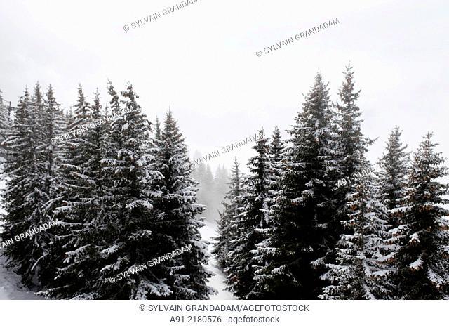 France, Haute-Savoie, Megeve in winter