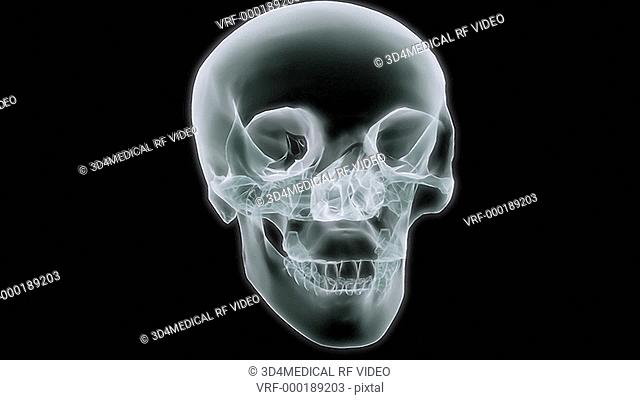 A brain appears inside a rotating transparent skull then the camera zooms right into the brain