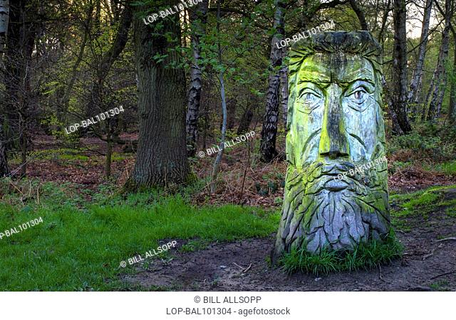 England, Leicestershire, Woodhouse Eaves. A green man carved from a tree trunk