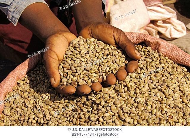 Coffee marked at Awasa, Ethiopia