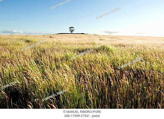 Crops in a field, Alentejo, Portugal