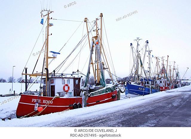 Fishing boats harbour of Friedrichskoog North Sea coast Dithmarschen district Schleswig-Holstein Germany frozen