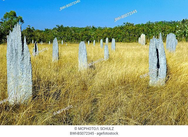 magnetic termite (Amitermes meridionalis), mounds, Australia