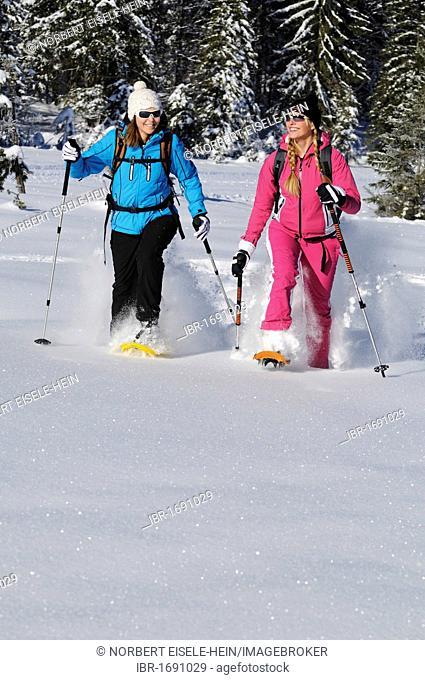 Snowshoers, Hemmersuppenalm mountain pasture, Reit im Winkl, Bavaria, Germany, Europe