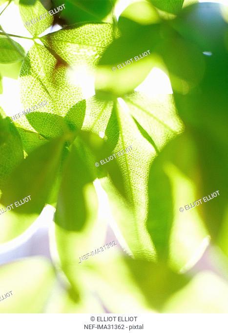 Sunlight through green leaves
