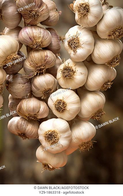 Hanging Garlic in Aix Market, Provence, France