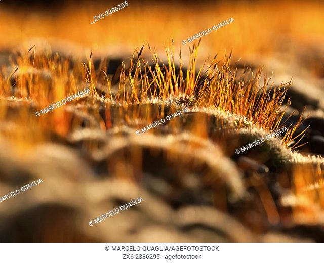 Stone wall covered by moss, detail. Backlit by sunset rays. Montclar d'Urgell small village near Agramunt village. La Noguera region, Lleida province, Catalonia