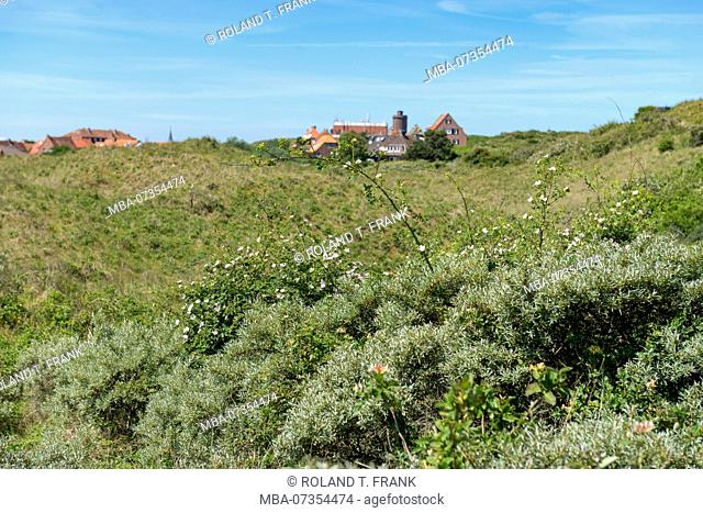 Germany, Lower Saxony, East Frisia, Juist, in the dunes of the island