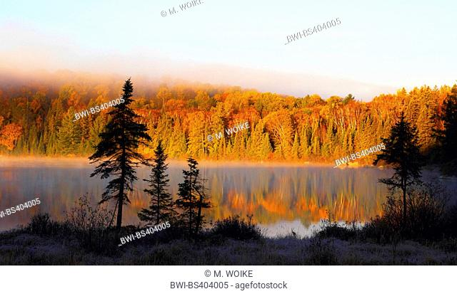 morning mood at a lake with mist in autumn, Canada, Ontario, Algonquin Provincial Park