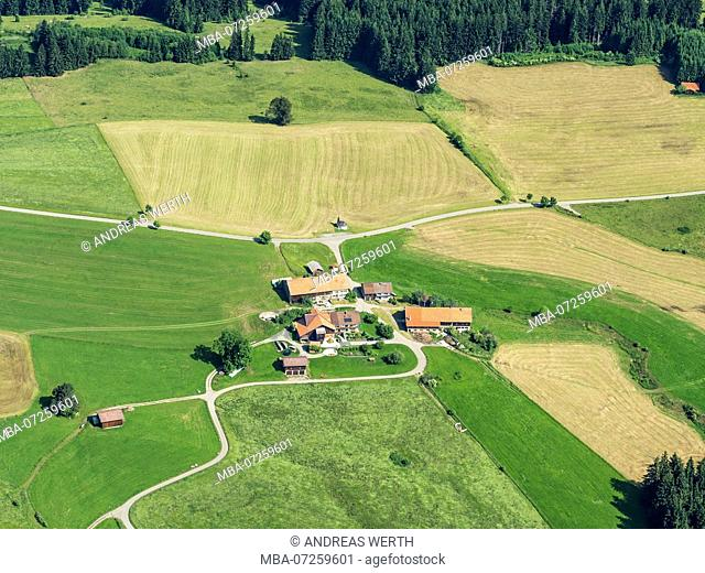Lonely group of farm houses surrounded by meadows, aerial view, slope of bavarian alps near Wertach, Allgäu, Allgaeu, Bavaria, Germany