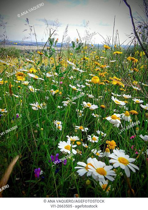 Meadow, Santa Cruz de la Sierra, Cáceres, Extremadura