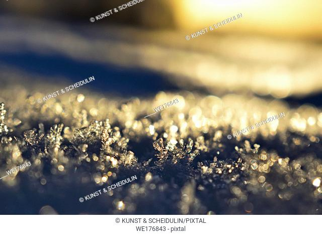 Frost crystals are shimmering in the golden light of the low winter sun on a cold day in northern Sweden