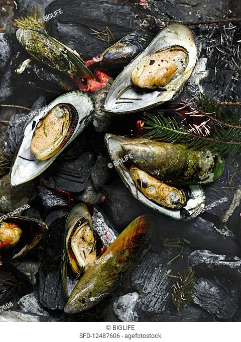 Mussels on a grill